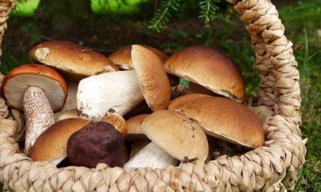Il fungo ripieno di Ruggero
